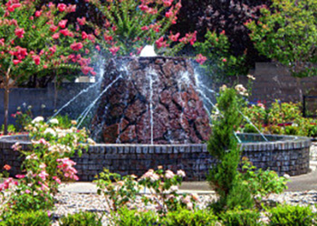 A water feature surrounded by rose bushes and plants